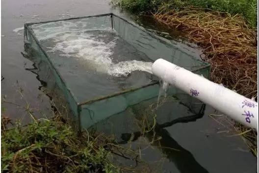 养殖丨养小龙虾需要多久换一次水?