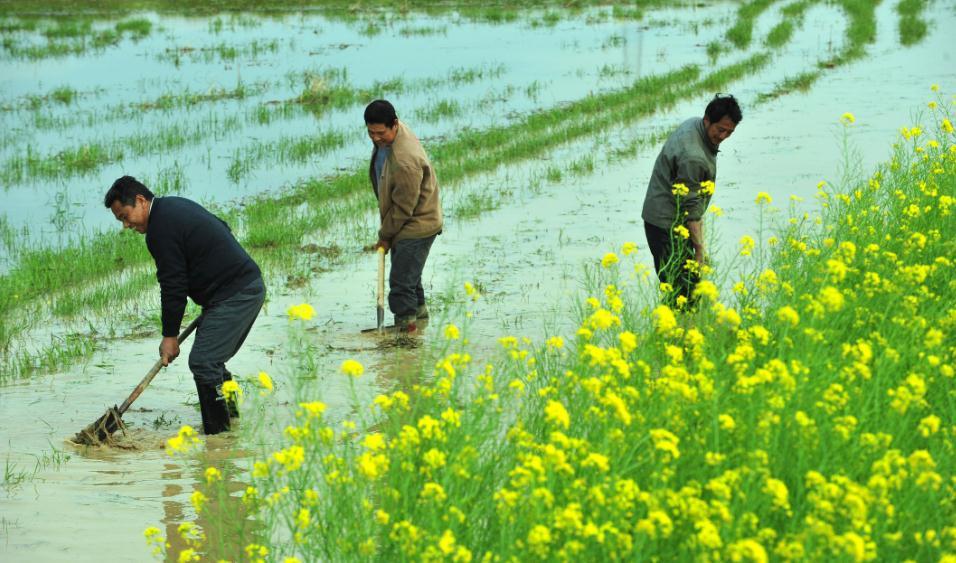精选 | 疫情期间如何保生产稳供给,农科专家奉上实用建议!