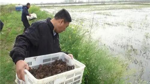 该如何进行小龙虾的高密度养殖?