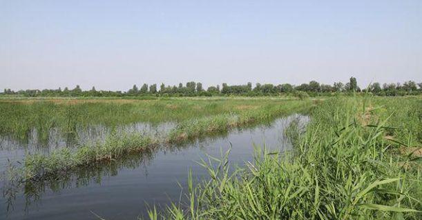 小龙虾养殖池塘的水草为何生长不起来