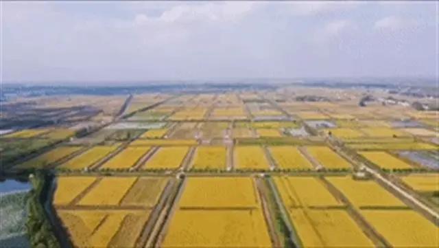 关注   潜江虾稻产业综合产值达500亿元,带动2万贫困人口脱贫致富